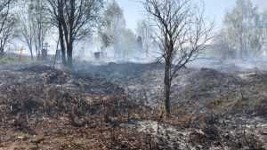 В Брянске загорелась сухая трава на центральном кладбище