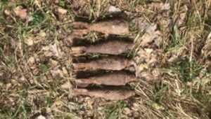 В Клинцах в поле нашли пять мин