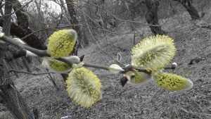 В Брянскую область 1 мая придут аномальные заморозки