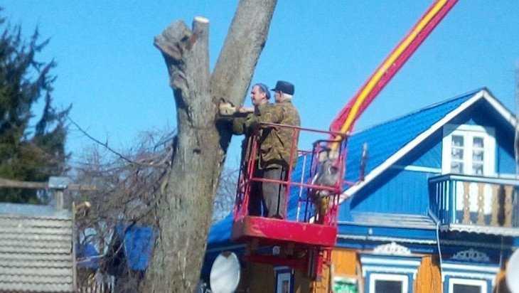В Климовском районе по просьбе жителей спилили опасные деревья