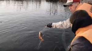 В Белых Берегах сняли 14 сетей браконьеров и спасли много рыбы