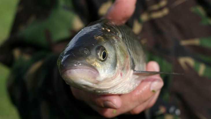На озере в Севске загадочно погибла рыба