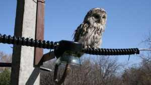 Высоковольтные ЛЭП в Брянской области оказались опасными для птиц