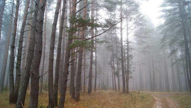 В Брянской области вырубленные леса восстановят за 133 млн рублей