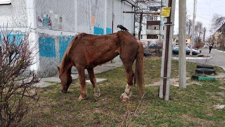 Брянцы пожалели худющего коня с птицей на спине