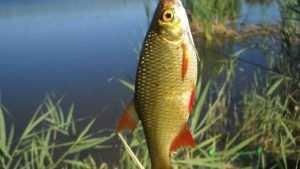 Жители Брянска сообщили о массовой гибели рыбы в реке Снежке