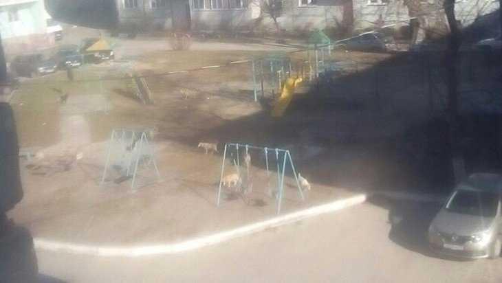 В Брянске двор многоэтажки захватила свора собак