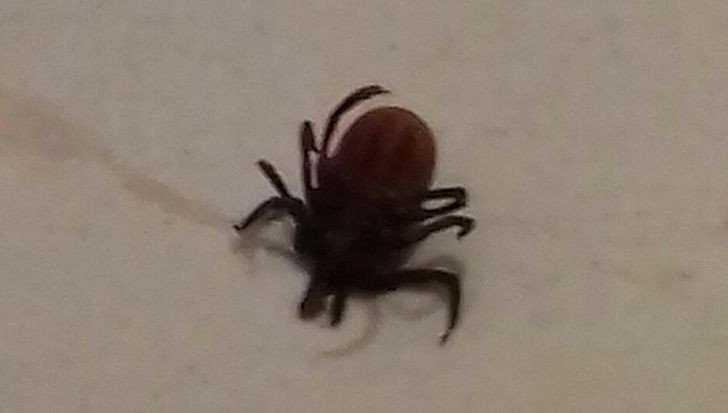 «Скотина членистоногая»: в городе брянца атаковали паукообразные