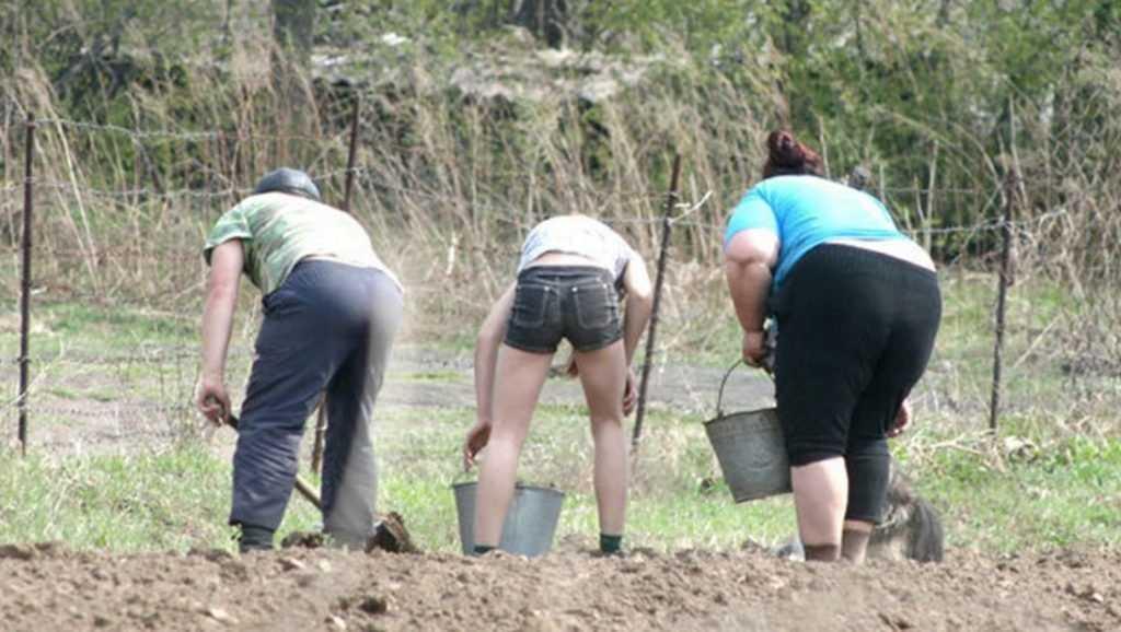 С 8 апреля на участках нельзя выращивать овощи и фрукты?