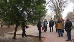 В Брянске в Круглом сквере срубят 9 аварийных деревьев