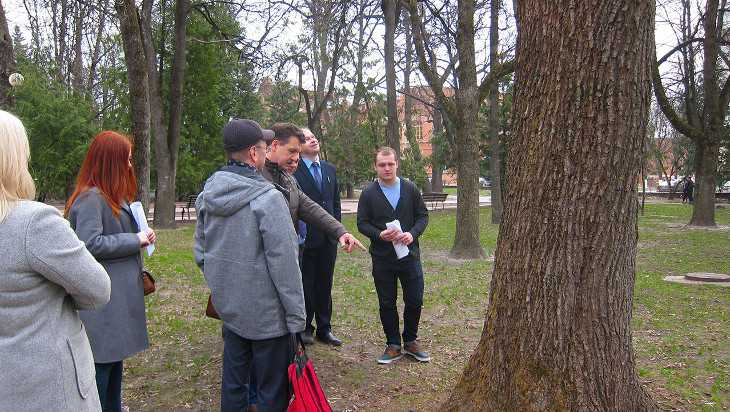 В Брянске решили судьбу аварийных деревьев в Круглом сквере