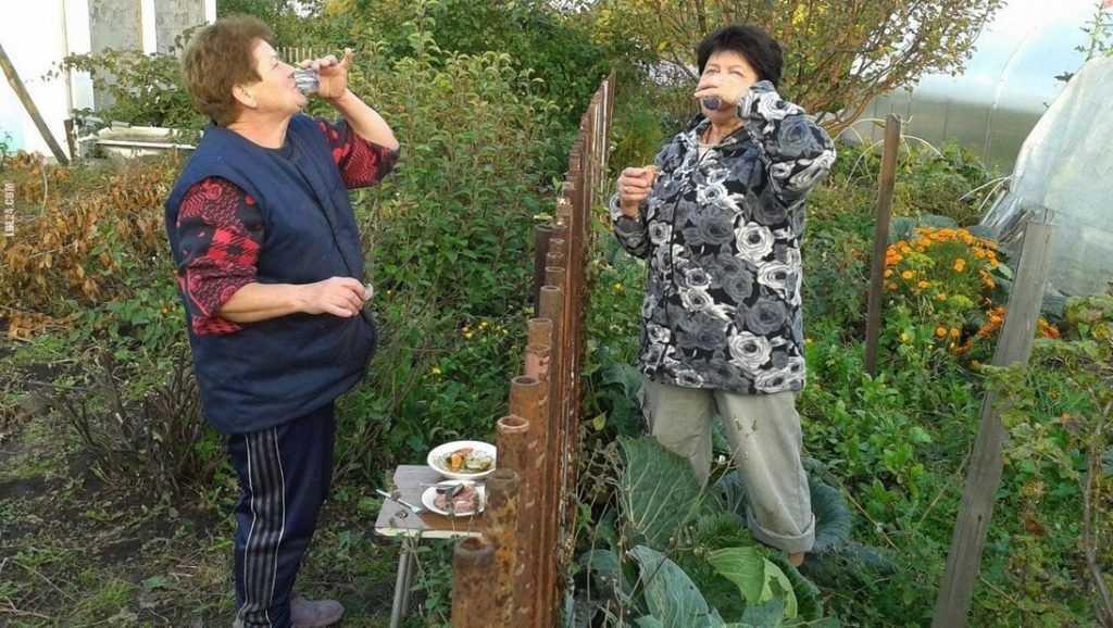 Власти сказали, как с 8 апреля выращивать на участках овощи и фрукты
