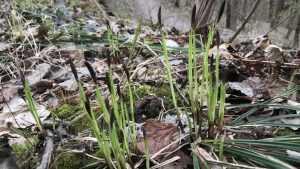 Брянской области 13 апреля пообещали дождь и 3-градусный мороз