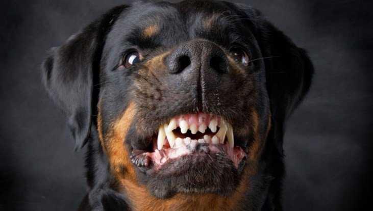 В Брянске почтальон отказался от доставки писем из-за собак