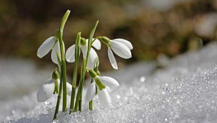 На Брянскую область обрушится мокрый снег