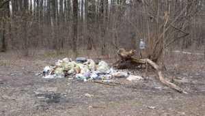 В Брянске чиновникам велели убрать свалку возле стадиона «Камвольщик»