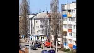 В Новозыбкове пожарные сняли кота с высоченного тополя