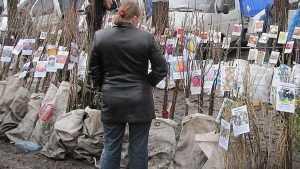 Более 300 подозрительных саженцев в Брянске изъяли из продажи