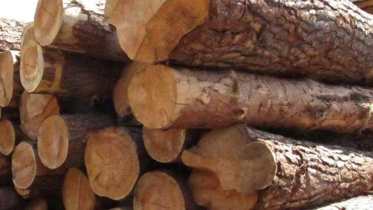 Аферисты придумали виртуозный способ брать брянский лес бесплатно