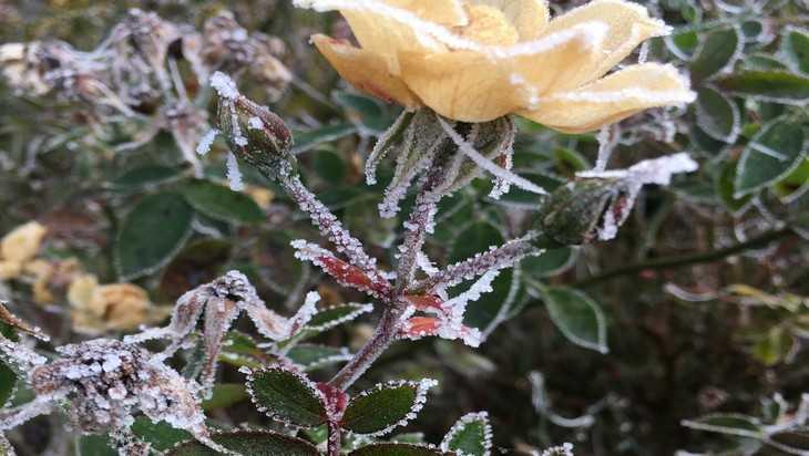 В Брянскую область вернётся 5-градусный мороз