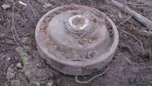 Под Навлей в лесу обнаружили противотанковые мины