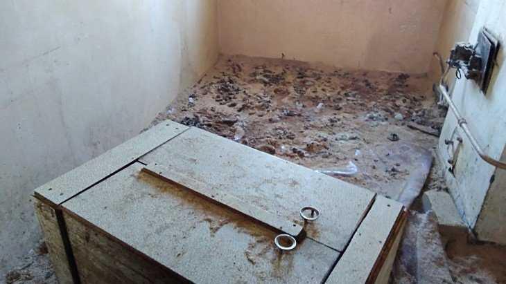 Собакам в брянском приюте устроили ад