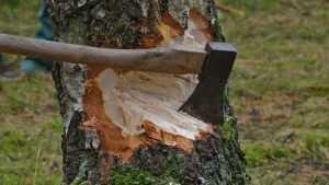 В Дубровке пенсионера осудили на 3 года за вырубку 30 деревьев