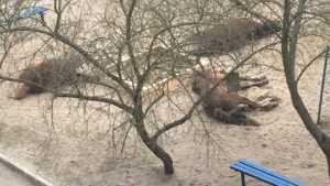 В Брянске три лошади устроили привал на детской площадке