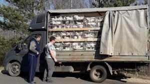 Брянские стражи задержали два «кудахтающих» грузовика из Белоруссии