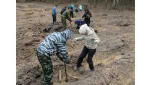 В Брасовском районе высадили около 4 тысяч маленьких сосен