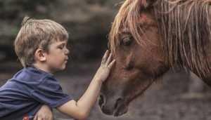 В Брянске 10-летний школьник упал с лошади и сломал позвоночник
