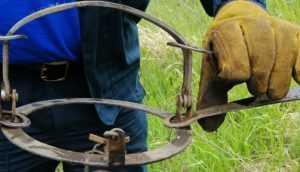 Жители Брянска вызволили из ловушки угодившую в капкан собаку