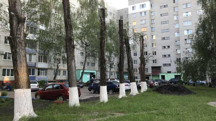 В брянских дворах появились пугающие частоколы из живых деревьев