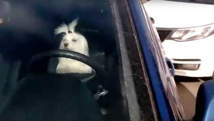 Брянский Бобик сел за руль и попал в ДТП