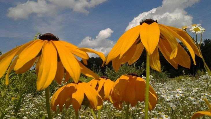 В Брянской области из-за жары объявили «желтый» уровень опасности