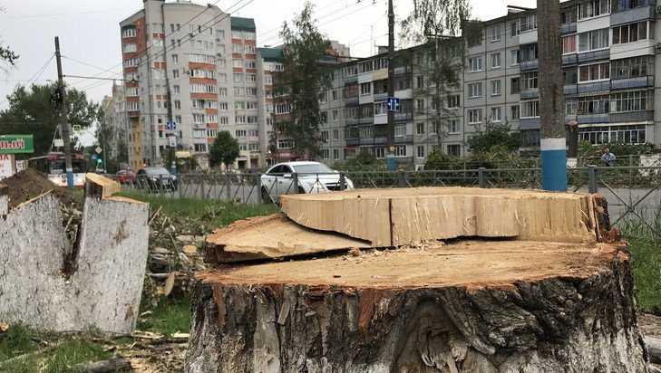 В Брянске пообещали заменить тополя другими деревьями