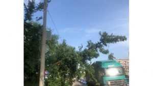 В Брянске на улице Бурова дерево завалилось на провода