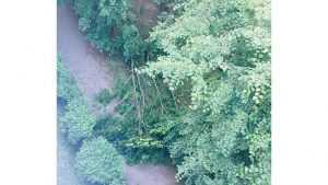 В Брянске возле школы №60 на тротуар рухнуло дерево