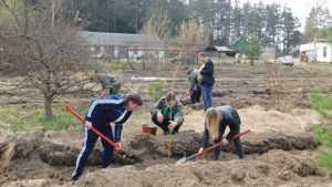 В Жуковке разбили дендросад
