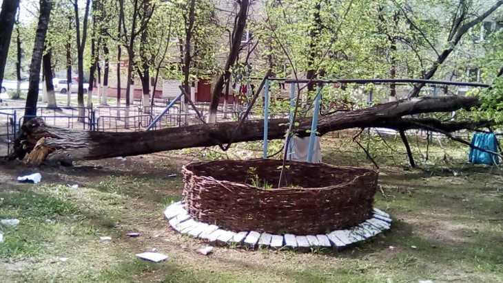 В Брянске на Камвольном обрушилось дерево во дворе дома