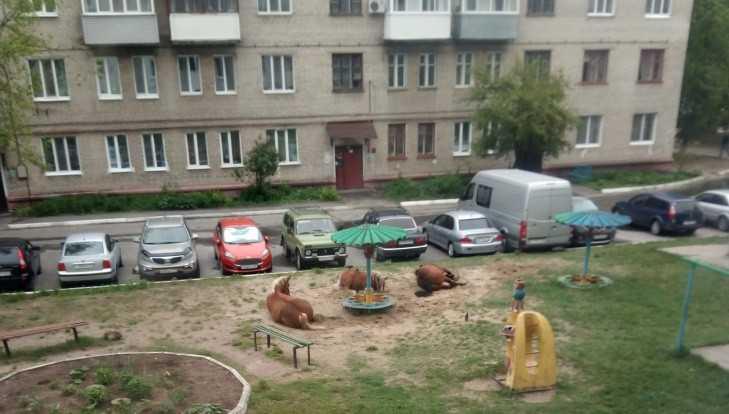В Брянске лошади цыган захватили детскую площадку