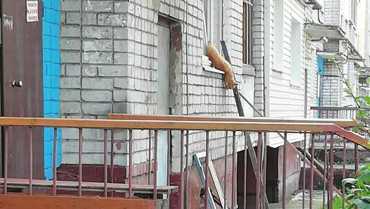 В Брянске вызволили застрявшего в окне кота