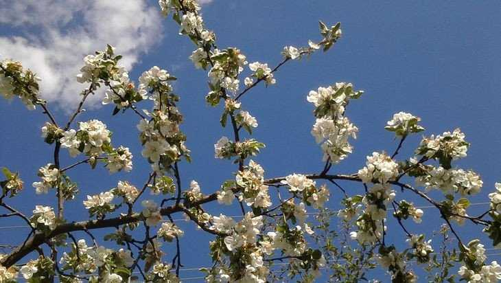 В Брянской области 16 мая потеплеет до 24 градусов