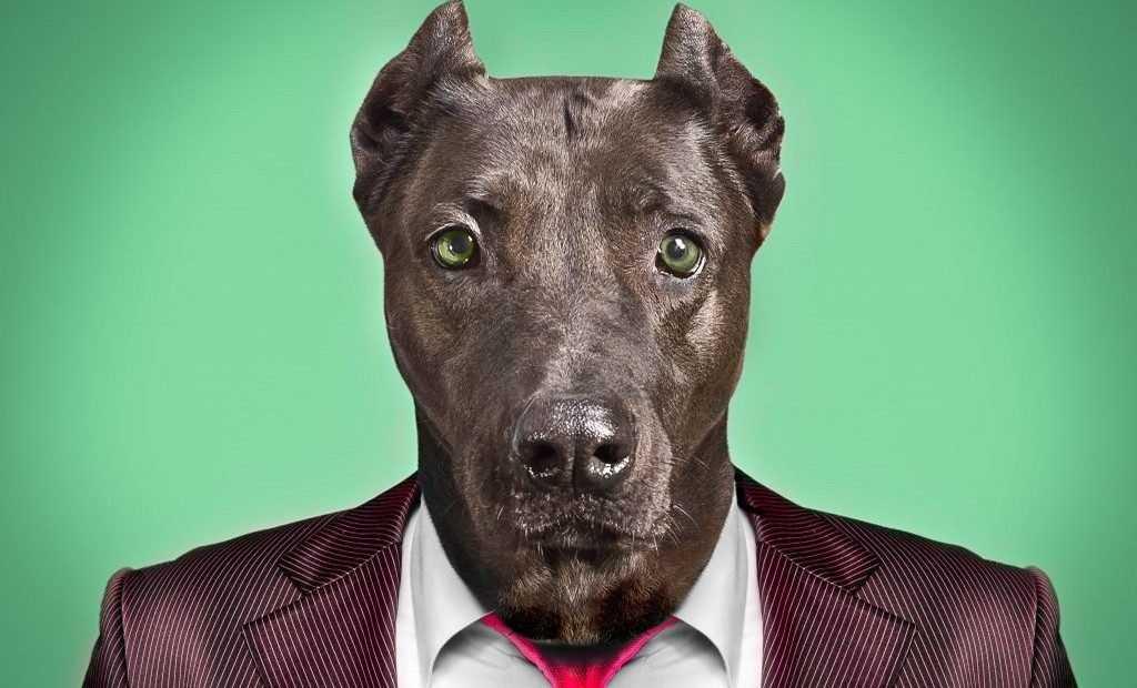 Путин сравнил чиновников с собаками