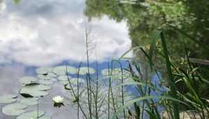 В Фокинском районе Брянска утонул мужчина