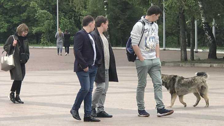 Стая собак перепугала детей в брянском парке «Соловьи»