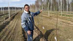 В Клетнянском районе удвоили площадь сербского яблоневого сада