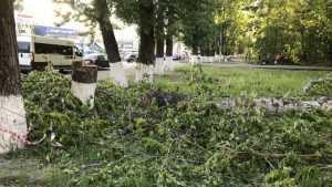 «Убивать надо было зимой»: брянцы возмутились уничтожением зелени
