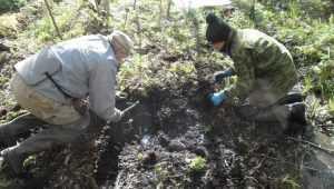 Под Новгородом обнаружили останки погибшего в 1942 году брянского бойца