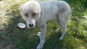 В Брянске на улицу выбросили большого пса с грустными глазами
